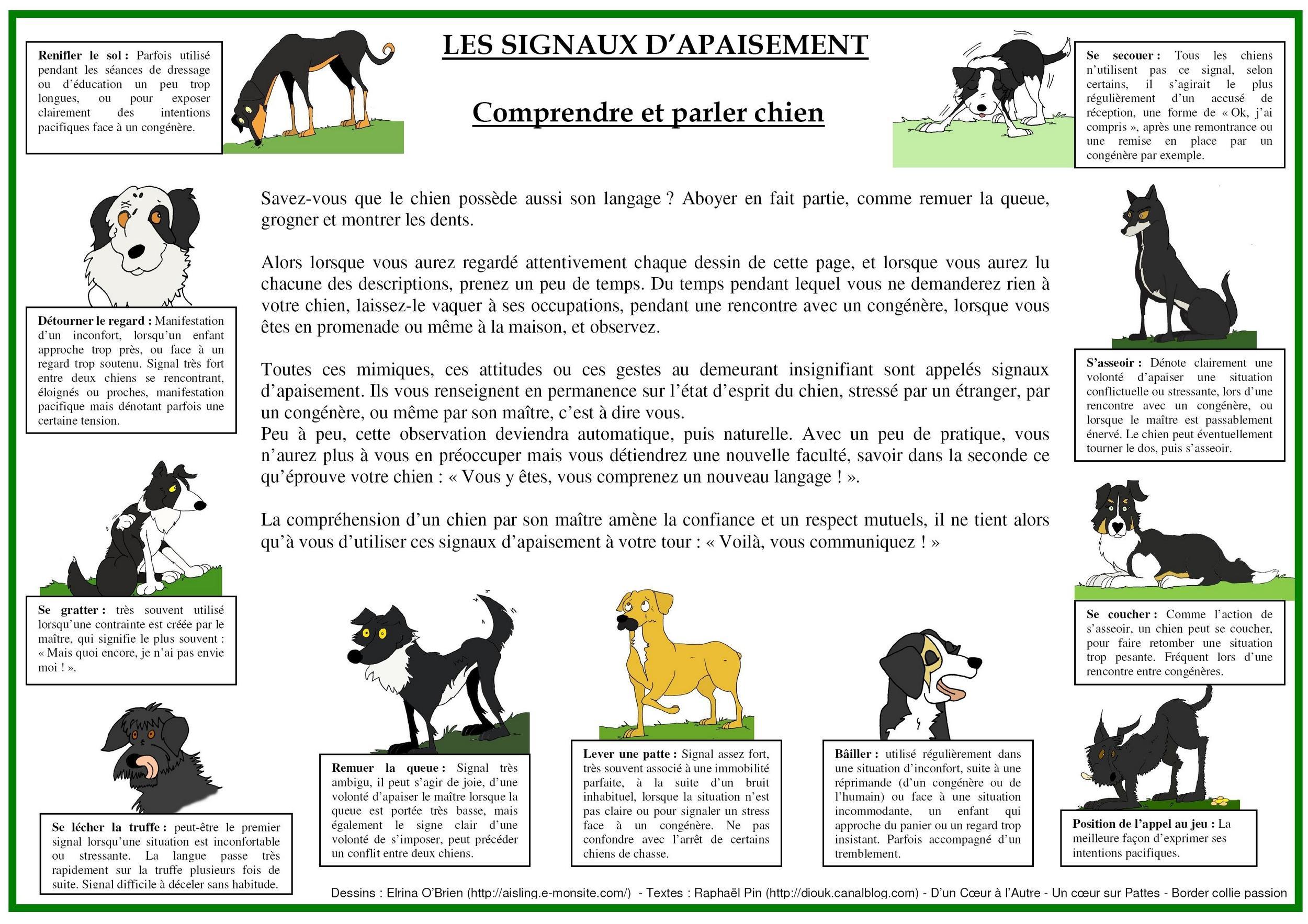 chien - présentation de JUSS, chien traumatisé  54156373739989